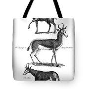 Antelopes Tote Bag