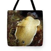 Aphelodoris Varia Sea Slug Nudibranch Tote Bag