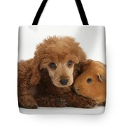 Apricot Miniature Poodle Pup With Red Tote Bag