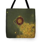 Arcella Lm Tote Bag by Eric V. Grave