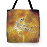 Archaeopteryx Lithographica Tote Bag