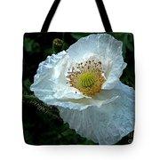 Arctic Poppy Tote Bag