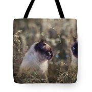 Are You Dreaming About Me - Siamese Feral Cat Tote Bag