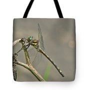 Arrowhead Spiketail Dragonfly - Cordulegaster Obliqua Tote Bag