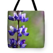 Arroyo Lupine  Tote Bag