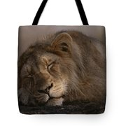 Asian Lion Panthera Leo Persica Tote Bag
