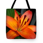 Asiatic Lily Named Gran Paradiso Tote Bag