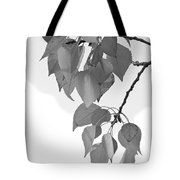 Aspen Leaves In Black And White Tote Bag