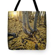 Aspen Trees Stand Above A Carpet Tote Bag