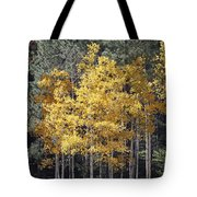Aspens In Color Tote Bag