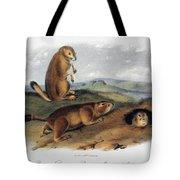 Audubon: Prairie Dog, 1844 Tote Bag