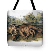 Audubon: The Cougar Tote Bag