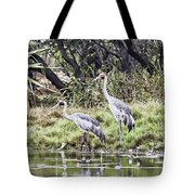 Australian Cranes At The Billabong Tote Bag