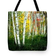 Autumn Birch Grove Tote Bag
