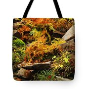 Autumn Ferns On Pickle Creek At Hawn State Park Tote Bag