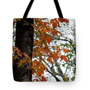 Autumn Glory At Tannehill Tote Bag