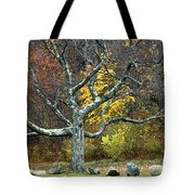 Autumn Grandfather Tree 2 Tote Bag