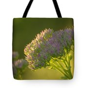 Autumn Joy Sedum Tote Bag