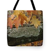 Autumn Leaves And A Lichen-covered Log Tote Bag