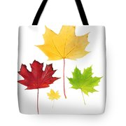 Autumn Leaves Isolated Tote Bag