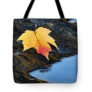 Autumn On The Tellico River - D004558 Tote Bag