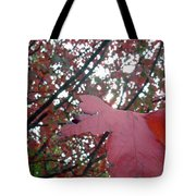 Autumn Red Maple Tree Tote Bag