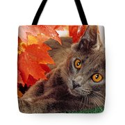 Autumn Reds And Ambers Tote Bag