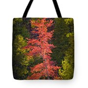Autumn Scene Of Colorful Red Tree Along The Little Manistee River In Michigan No. 0902 Tote Bag