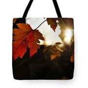 Autumn Sunburst Tote Bag