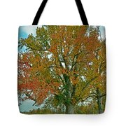 Autumn Sweetgum Tree Tote Bag