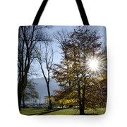 Autumn Tree In Backlight Tote Bag