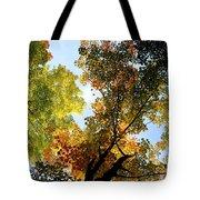 Autumn Trees Low-angle Tote Bag