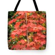 Autumnal Acer Tote Bag