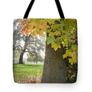 Autumn's Gold Tote Bag