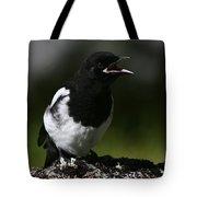 Baby Blackbilled Magpie Tote Bag