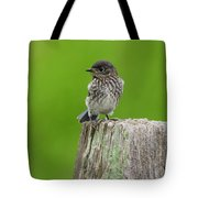 Baby Bluebird On Post Tote Bag