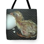 Baby Chick Resting  Tote Bag