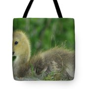 Baby Goose Takes A Break Tote Bag