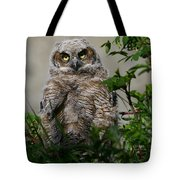 Baby Great Horned Owl Tote Bag