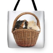 Baby Guinea Pigs In A Wicker Basket Tote Bag