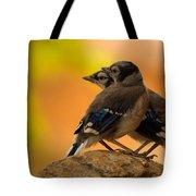 Baby Jays Tote Bag