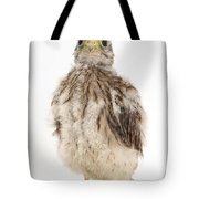 Baby Kestrel Tote Bag