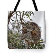 Baby Koala Tote Bag