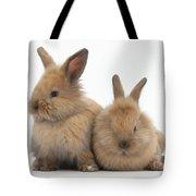 Baby Lionhead Rabbits Tote Bag