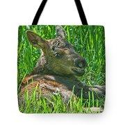 Baby Moose Tote Bag