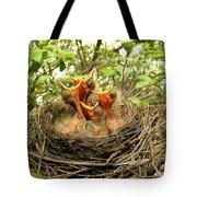 Baby Robins Tote Bag