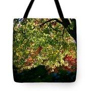 Backlit Autumn Tote Bag