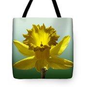 Backlit Daffodil Tote Bag