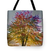 Backlit Maple In Autumn's Light Tote Bag