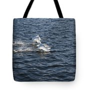 Backlit Swans Tote Bag